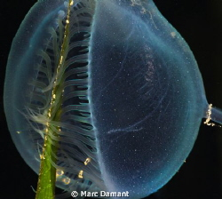 "I call this one ""Translucent Hunger""