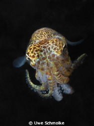Bobtail -