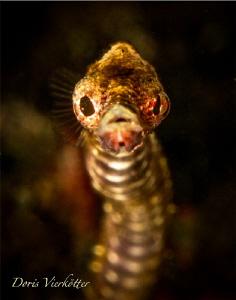 Pipefish by Doris Vierkötter