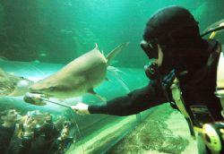 Shark Feed. Nikon D70 14mm lens by Grant Kennedy
