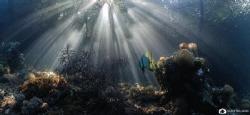 Pouring rays... by Nadya Kulagina