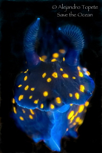 Nudibranch on Black, La Paz Mexico by Alejandro Topete