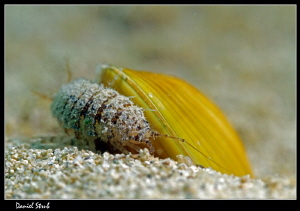 I don't know whether the small larvae was trying to get s... by Daniel Strub