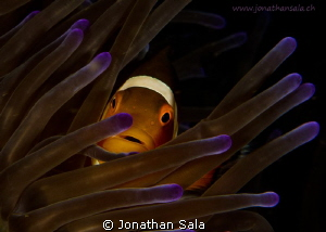 nemo... always the best subject,,, by Jonathan Sala