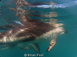 Dolphin reflections by Brian Pool