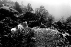Natural light reefscape in black and white. St. Lucia. Ni... by Matthew Shanley