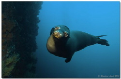 What about applause ?  Playing Sealion on Punta Vicente... by Reinhard Arndt
