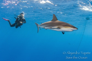 Shark and Diver in Surface, Gardens of the Queen by Alejandro Topete