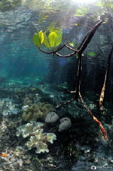 Mangroves by Nadya Kulagina