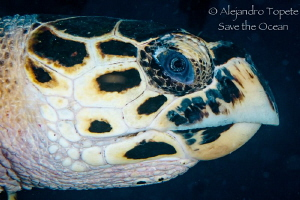 Turtle Head, Playa del Carmen Mexico by Alejandro Topete