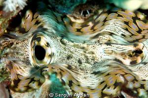 I like colors by Sergun Aydan