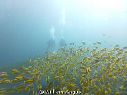 A Nice Fun Dive On Bida Nok - Thailand by William Angus