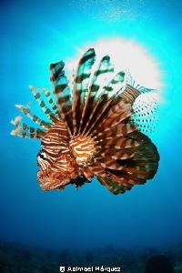 Lionfish by Abimael Márquez