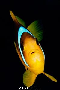 Nemo by Gleb Tolstov