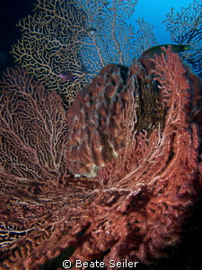 Sponges at the wreck by Beate Seiler