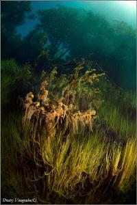 Magic Forest Russia, Caucasus, Blue Lake by Dmitry Vinogradov