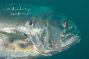 Jack Close UP, Isla Lobos Mexico by Alejandro Topete