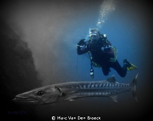 "Barracuda Jhon living in ""The liberty Wreck"" Tulamben by Marc Van Den Broeck"