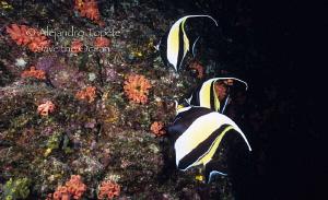 3 Morish Idol, Islas Revillagigedo Mexico by Alejandro Topete