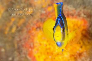 Angel in Orange, Isla Lobos Mexico by Alejandro Topete