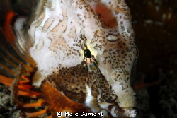 Colour Testure Dignity