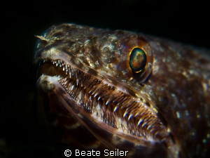 Lizard fish by Beate Seiler