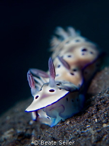 Two nudis by Beate Seiler