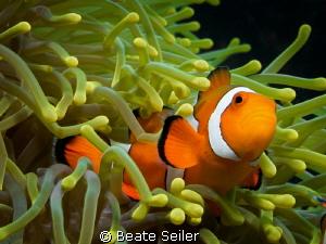 Nemo by Beate Seiler