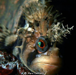 Portrait of a Warbonnet This Decorated Warbonnet was jus... by Marc Damant