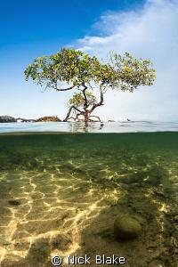 Split shot in the Komodo Mangroves, Indonesia by Nick Blake