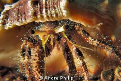 Homestory - a look in the home of a hermit crab by Andre Philip