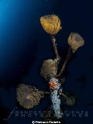 Marine life! by Francesco Pacienza