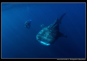 Whale Shark encounter... :O).. by Michel Lonfat