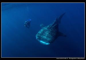 Whale Shark encounter... :O).. by Michel Lonfat