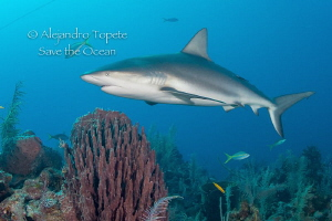 Master of the Reef, Gardens of the Queen Cuba by Alejandro Topete