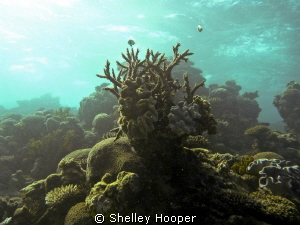 Hard corals at Great Barrier Reef, Cairns, Australia. by Shelley Hooper