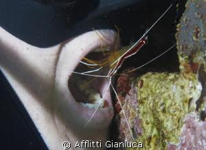 doctor.....shrimp by Afflitti Gianluca