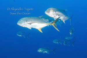 Golden Jack's, Plataforma Tiburon Tamiahua by Alejandro Topete