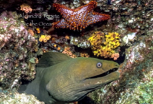 Green Morey with Star, La Paz Mexico by Alejandro Topete