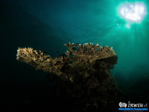 Heart shaped Sunlight. Redang Island, Malaysia. April 2013 by Irwin Ang