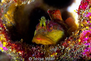 Who says Washington State diving is not colorful :-) by Jesse Miller