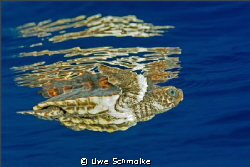 Turtle and reflection -   Have fun watching. by Uwe Schmolke