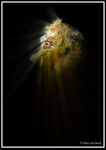 seahorse with backlights by Dray Van Beeck