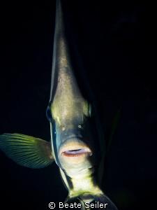 Batfisch by Beate Seiler
