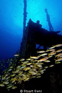 """The shipwreck """"Mahi"""" on Oahu's west side. by Stuart Ganz"""
