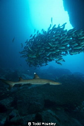 White tip in Dos Amigos Grande tunnel by Todd Moseley