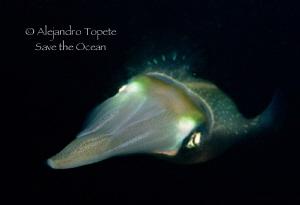 Squid face, Veracruz Mexico by Alejandro Topete