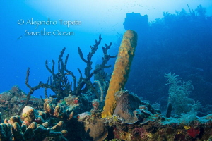 Corals in Wreck, Gardens of the Queen Cuba by Alejandro Topete