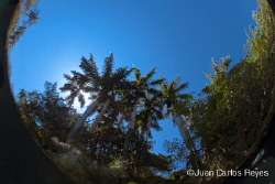 serie, 3 of 3 photgos about palm trees in deferent techni... by Juan Carlos Reyes