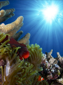 Clownfishes in sun rays by Iyad Suleyman